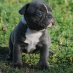 Bullistik Blue Male h
