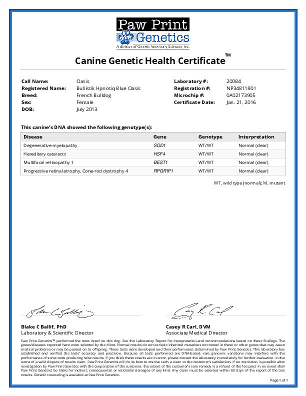 Oasis Health Certifications – Blue French Bulldogs by Bullistik